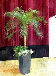Location de palmier artificiel Phoenix ht 2.00m